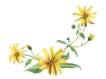 与叶子的水彩黄色雏菊分支 库存照片