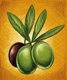 与叶子的绿橄榄 免版税库存照片