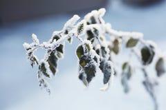 与叶子的冻结的分支反对天空,冬天风景 图库摄影