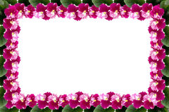与叶子的紫罗兰色框架在与空间的白色背景您的文本的 免版税库存图片