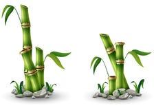 与叶子的绿色竹词根在白色背景 向量例证