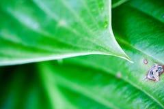 与叶子纹理的绿色,抽象构成 库存图片