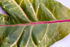 与叶子纹理的绿色,抽象构成 免版税图库摄影