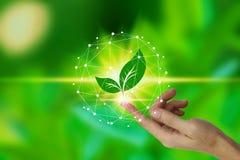 与叶子象的手指接触在自然背景,技术生态概念的网络连接 r 免版税库存图片