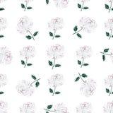 与叶子雏菊手拉的样式的菊花在白色 库存照片
