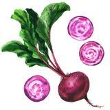 与叶子,被隔绝的新鲜的整个和切片甜菜的甜菜根,设置了甜菜,食物,菜,在白色的水彩例证 免版税库存照片