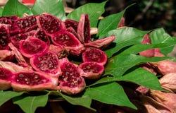 与叶子2的红色热带水果 库存图片
