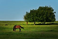 与吃草在多布罗加的树和马的美好的风景 库存照片