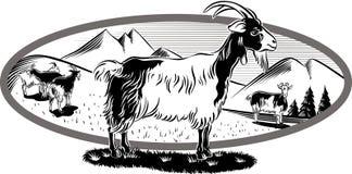 与吃草的山羊的卵形框架 免版税库存图片