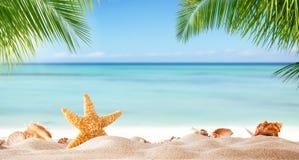 与各种各样的壳的热带海滩在沙子 免版税库存图片