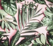 与各种各样的密林的绿色热带自然离开与水下落在桃红色苍白背景 免版税库存图片
