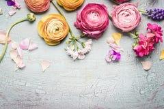 与各种各样的庭院的水平的花卉边界在土耳其玉色破旧的别致的背景开花 免版税库存照片