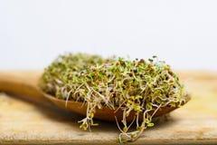 与各种各样的毒菌混合物的匙子积土发芽木表面上 库存照片