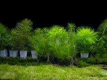 与各种各样的水生植物的水族馆坦克 库存照片