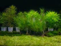 与各种各样的水生植物的水族馆坦克 库存图片