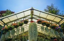 与各种各样的种类的垂悬的花在篮子罐的花 免版税库存图片