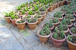 与各种各样的花幼木的花盆 免版税库存图片