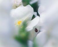 与各种各样的金龟子科之昆虫的Snapdragon 库存图片