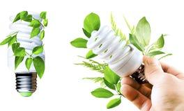 与各种各样的绿色的萤光电灯泡在手离开 库存照片