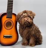 与吉他的Bolonka ZWETNA 库存图片