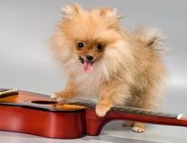 与吉他的Pomeranian 免版税图库摄影