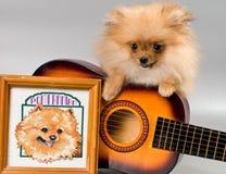 与吉他的Pomeranian 免版税库存图片