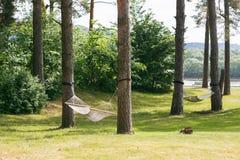 与吊床的松弛懒惰时间在摇摆在夏天庭院里的绿色森林美好的风景,晴天 库存图片