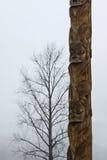 与后边孤立树的传统Gitxsan图腾柱 库存图片