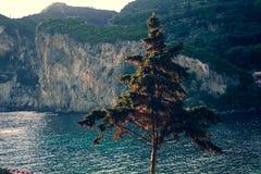 与后边水和岩石峭壁的杉木 清洗海、树和山在前景科孚岛希腊 希腊横向 欧洲pla 免版税库存图片