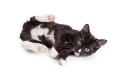 与后面腿的嬉戏的小猫 免版税库存图片