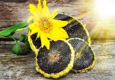 与向日葵种子的向日葵在木纹理 免版税库存照片