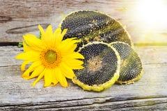 与向日葵种子的向日葵在木纹理 库存图片