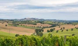 与向日葵领域、葡萄园和橄榄色的领域在波尔托雷卡纳蒂附近在马尔什地区,意大利的农村夏天风景 库存图片