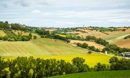 与向日葵领域和橄榄色的领域在波尔托雷卡纳蒂附近在马尔什地区,意大利的农村夏天风景 免版税库存照片