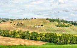 与向日葵领域和橄榄色的领域在波尔托雷卡纳蒂附近在马尔什地区,意大利的农村夏天风景 库存照片