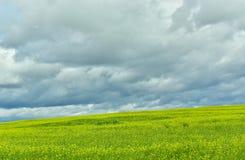 与含油种子的黄色领域在秋天 图库摄影