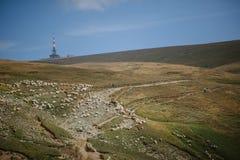 与听见的绵羊的山高原 免版税图库摄影