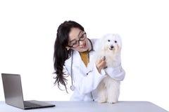 与听诊器的兽医审查的狗 库存照片