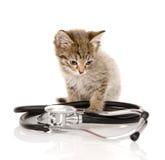 与听诊器的小猫 背景查出的白色 免版税库存图片