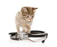 与听诊器的小猫 背景查出的白色 库存图片