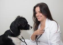 与听诊器的狗审查一位女性狩医的 免版税库存照片