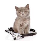 与听诊器的英国小猫 背景查出的白色 免版税库存图片