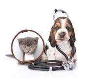 与听诊器的贝塞猎狗小狗在他的脖子和小猫 查出在白色 免版税库存图片