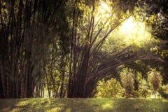 与启示阳光的热带竹树丛风景背景通过茂盛植物葡萄酒样式 免版税库存照片