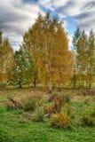 与呈杂色的桦树的秋天风景 免版税库存图片