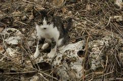 与周围的猫的混合 免版税库存图片