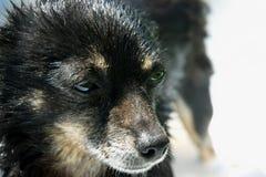 与哀伤的扫视,一张美妙的狗照片的一条小和湿狗在一个晴天 库存照片