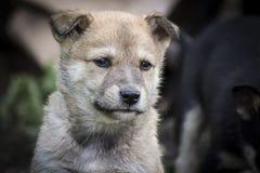 与哀伤的眼睛的小狗 图库摄影