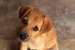 与哀伤的眼睛的逗人喜爱的小狗 库存图片