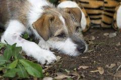与哀伤的面孔的逗人喜爱的小狗 免版税库存图片